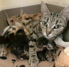 004 Nala and kittens