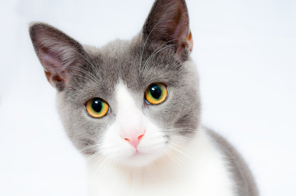 A cat with yellow eyes Description automatically generated with medium confidence