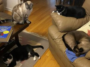 A group of cats on a couch Description automatically generated with medium confidence