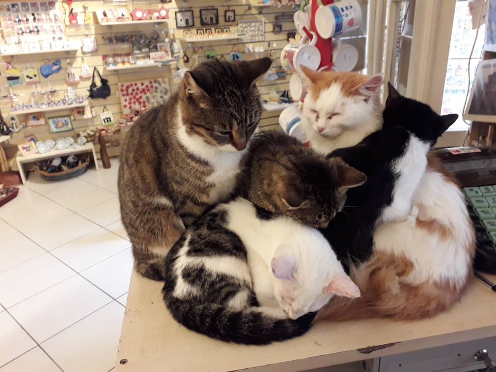 A group of cats sitting on a table Description automatically generated with low confidence