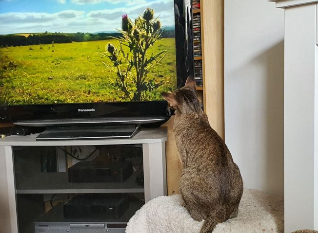 A cat watching a tv Description automatically generated with medium confidence