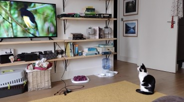 A cat watching a tv Description automatically generated with low confidence