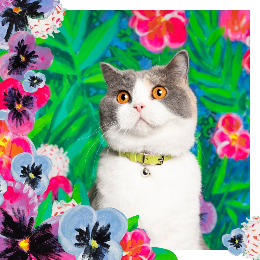 A picture containing cat, flower, colorful, mammal Description automatically generated