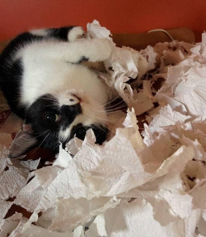 destroying the evil paper towels