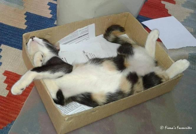 rosie in box 1