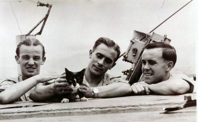 ASIp48 PDSA - Simon - ship's cat aboard HMS Amethyst  - who received the PDSA Dickin Medal