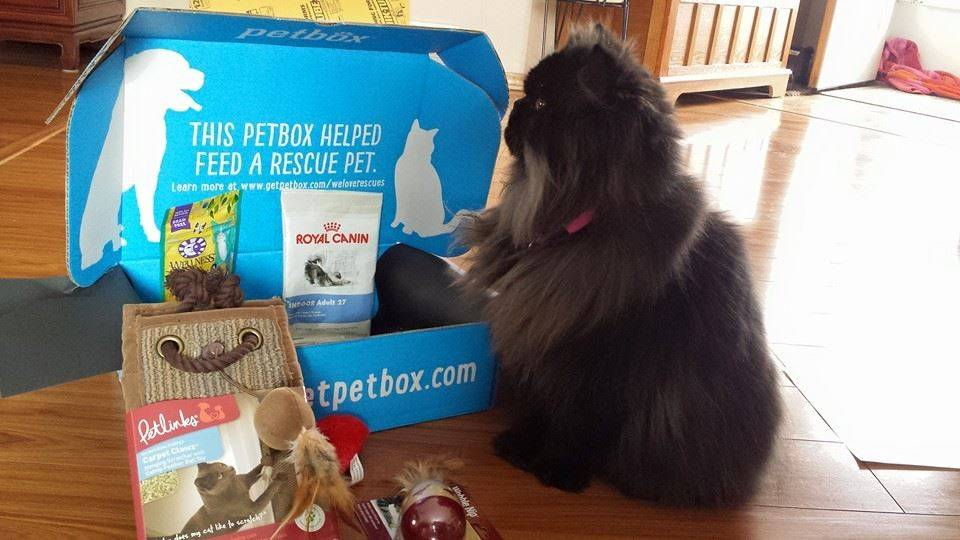 about petbox