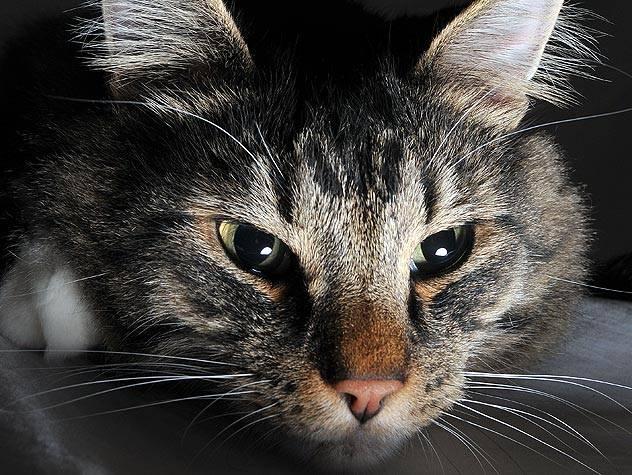 101384156-cat-calm-at-night-632x475