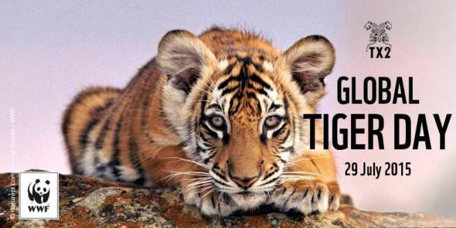 Bengal tiger (Panthera tigris) cub. USA