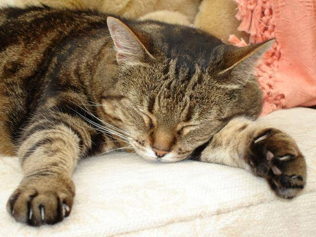 Weird Facts You Probably Didn T Know About Cats