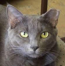 cat eartip39