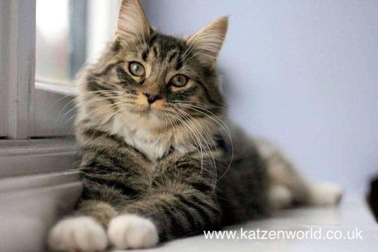 cat-windowsill