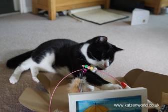 Nubia: Oli.... that's MY feather toy