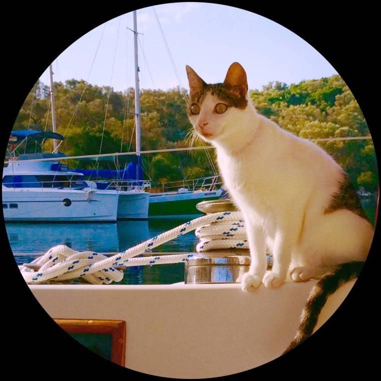 the luckiest cat in Greece