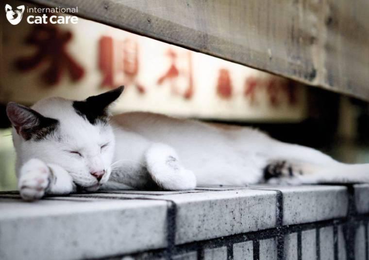 3-Meow