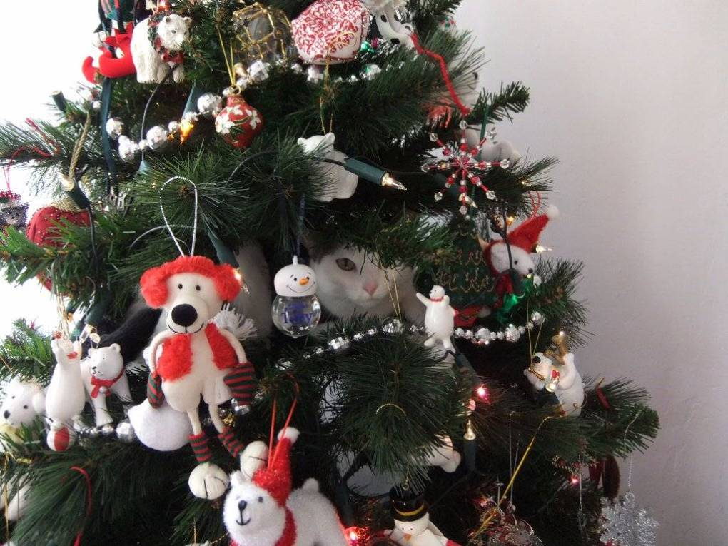 a cat safe christmas