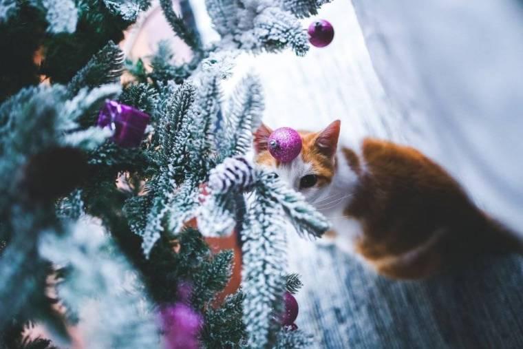 cat-791141