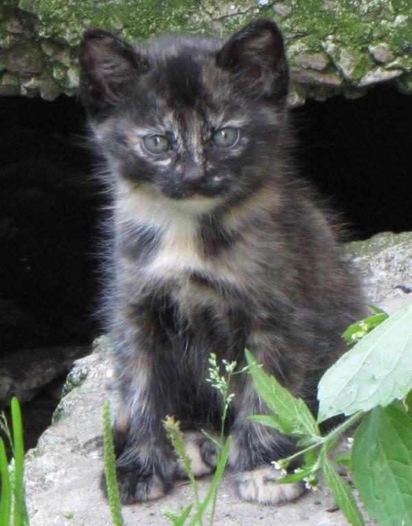 Secret-live-of-street-cats-of-Riga-5755df6094dad-jpeg__880