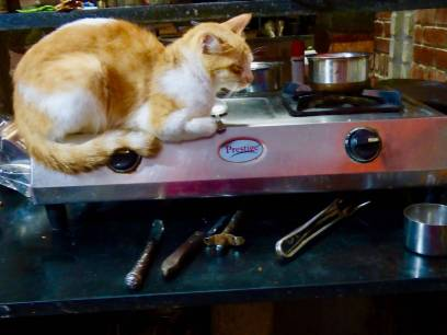 cat on the stove 2