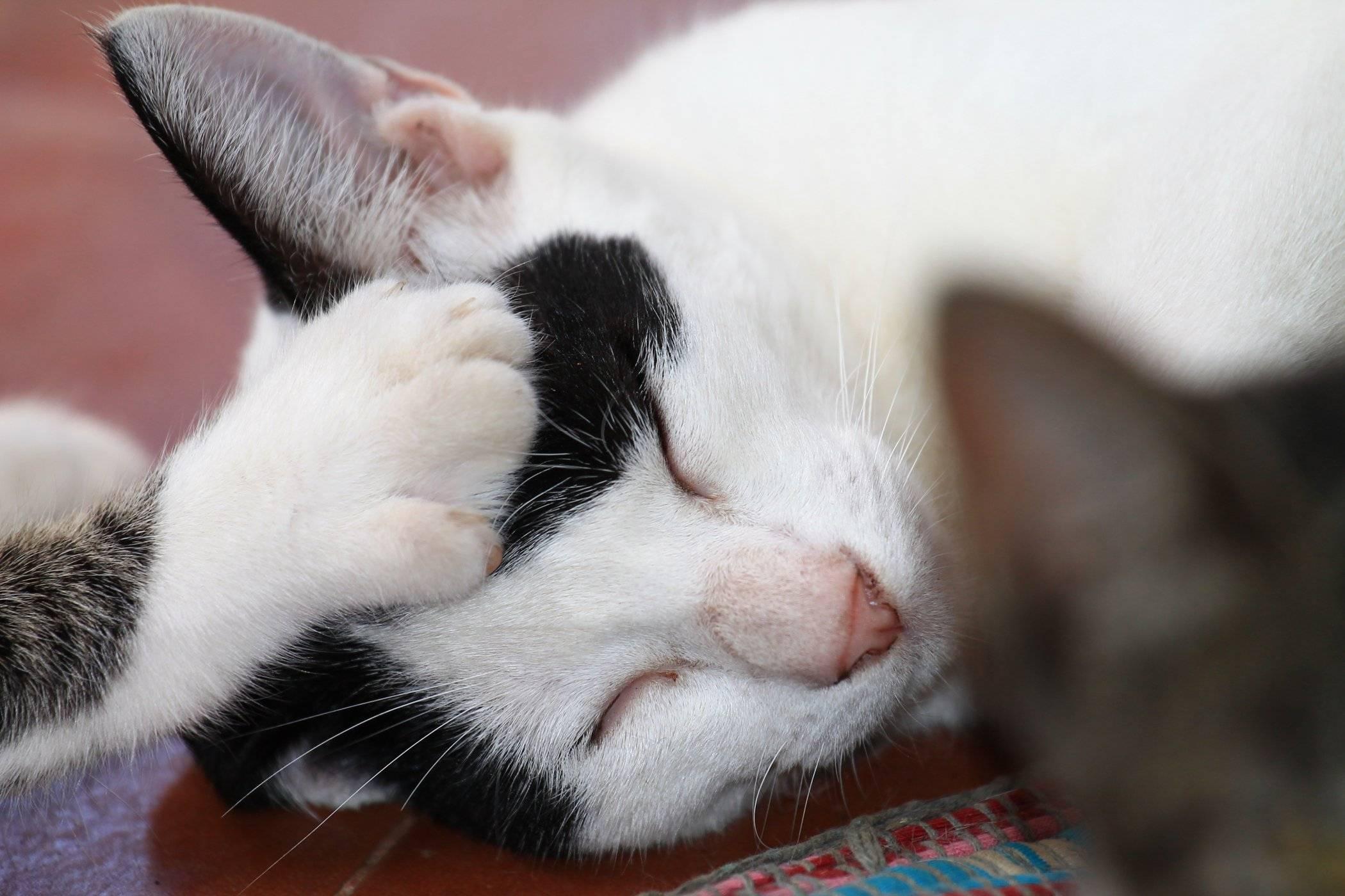 Responsible Use of Antibiotics in Pets