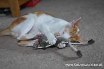 4cats monkey0013