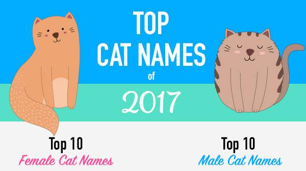 Infographic Top Cat Names Of 2017