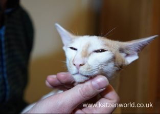 Katzenworld Frontline PetCare animed direct 0007