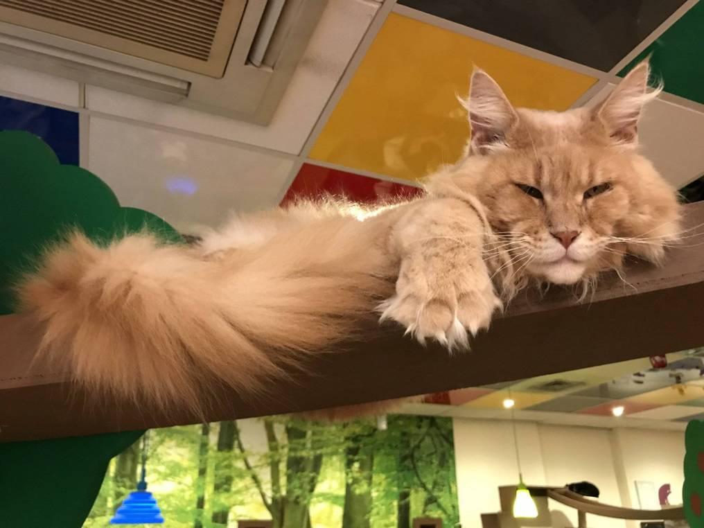 KittyCafeNottingham-31