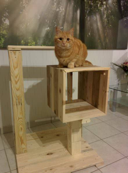 Build custom cat trees that are attractive and fun for Smooches and Miss-Kitty.