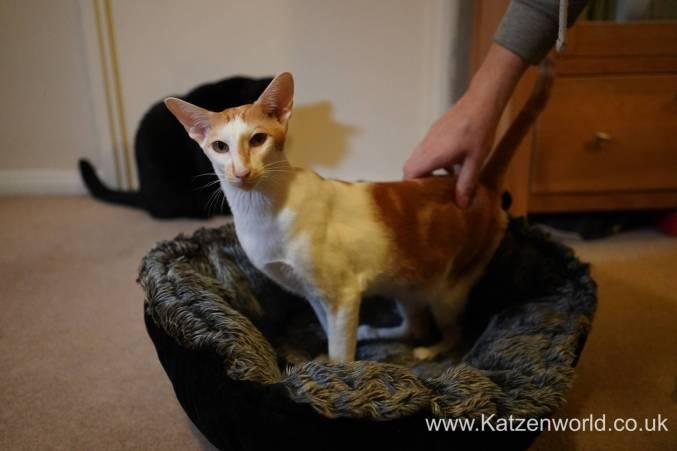 Katzenworld Mikki Bed0008