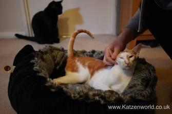 Katzenworld Mikki Bed0010