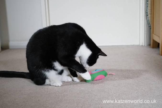 Katzenworld bowless feeder0027