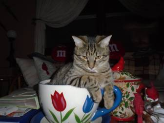 TigGRRR III 2015 January Tea Cup 5
