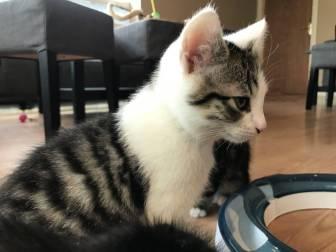 Cat_lounge_dublin-020