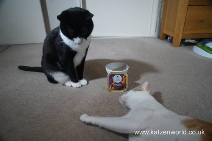 Feline Cuisine Katzenworld0009
