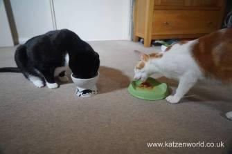 Feline Cuisine Katzenworld0026