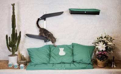 Katzenworld Catipilla0002