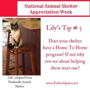 LilyShelterAppreciation