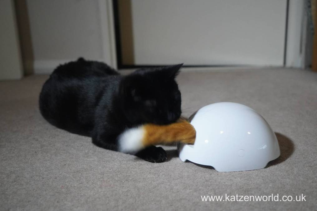 foxden Katzenworld0018