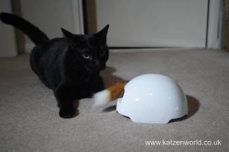 foxden Katzenworld0020