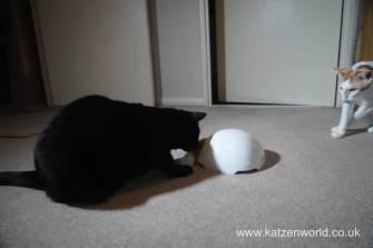 foxden Katzenworld0021
