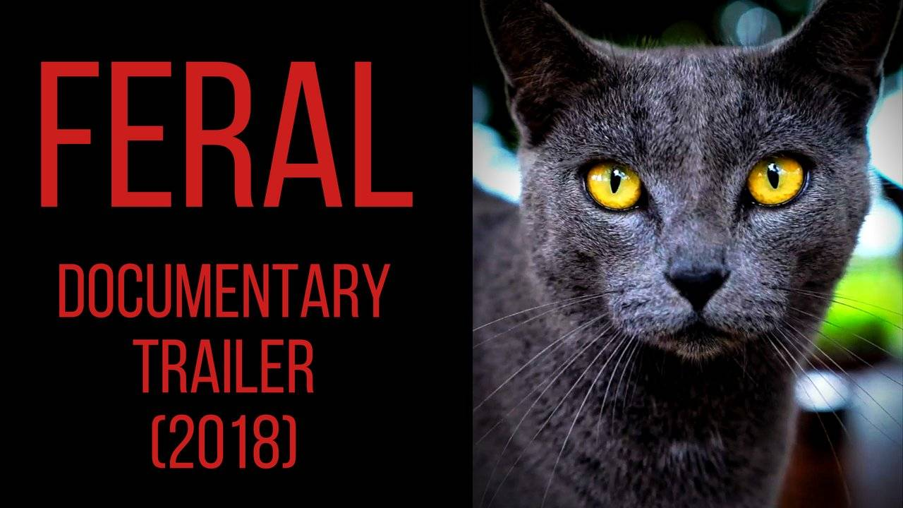 FERAL: The Battle over Hawaii's Cats (2018 ) [Documentary Trailer]