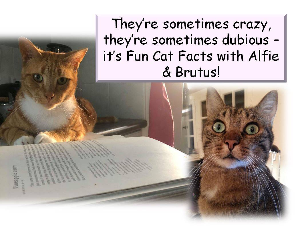 Fun Facts with Alfie & Brutus: The Cats Brain