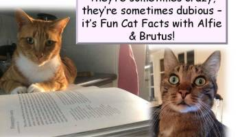 Fun Facts with Alfie & Brutus: Cat's Whiskers