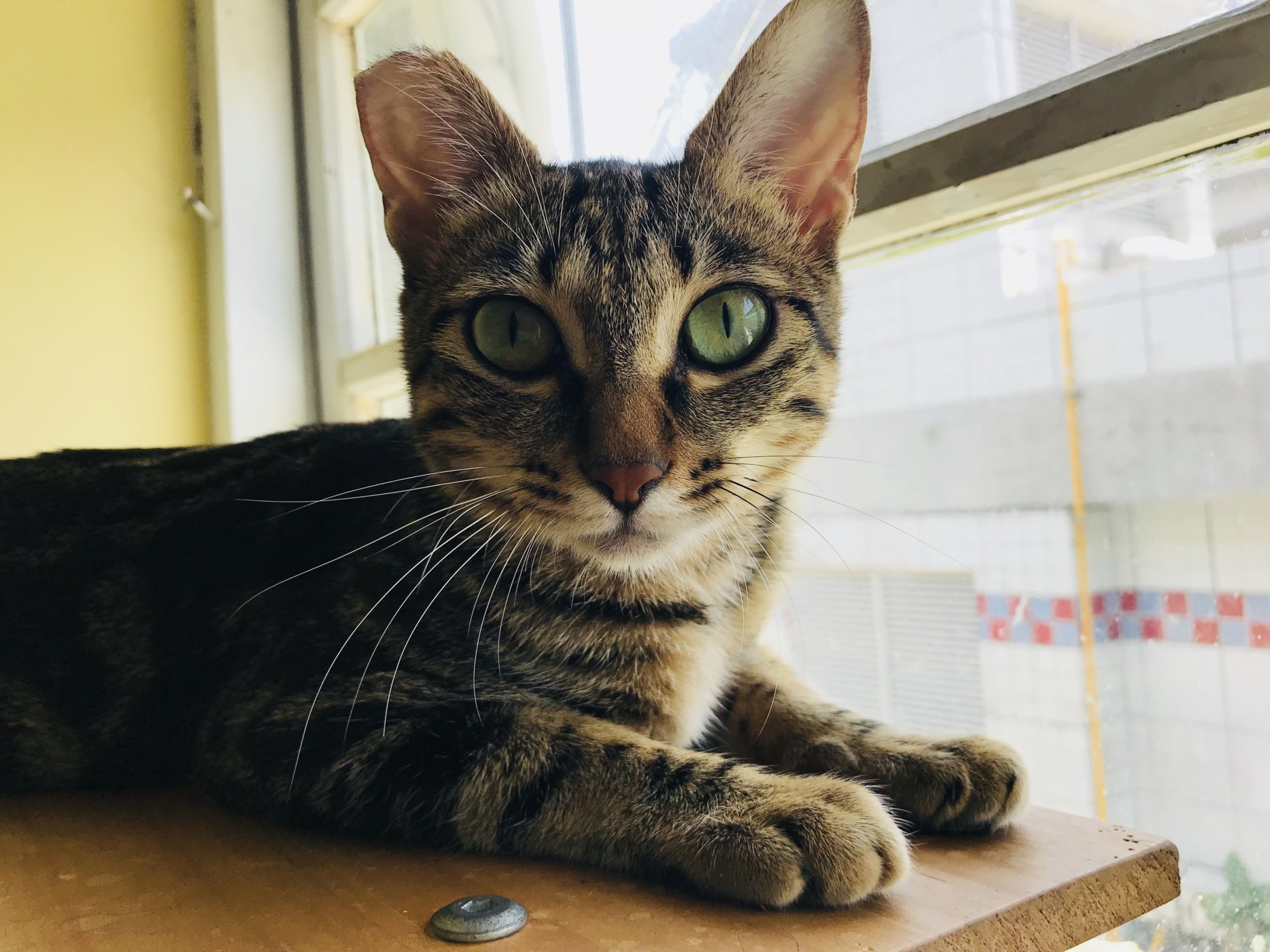 Do Good & Have Fun: Rescue Cat Cafes in Taipei