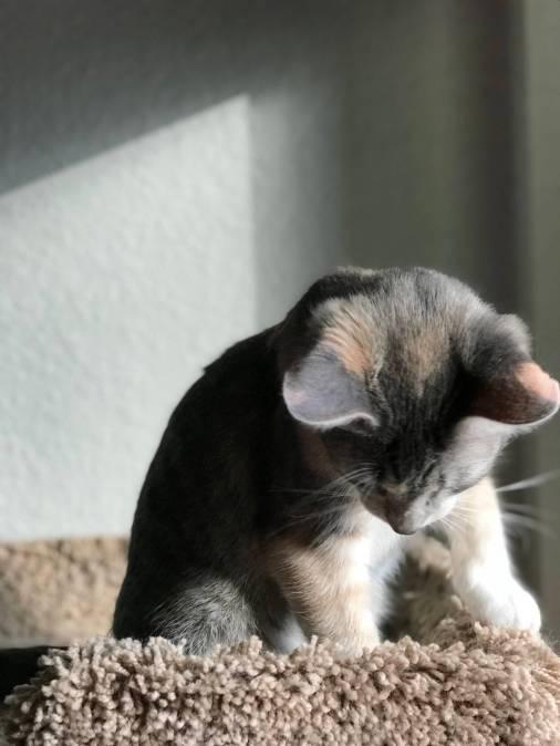 harvey the cat 2