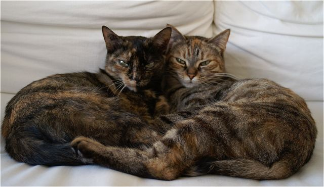 mindfulness and cats