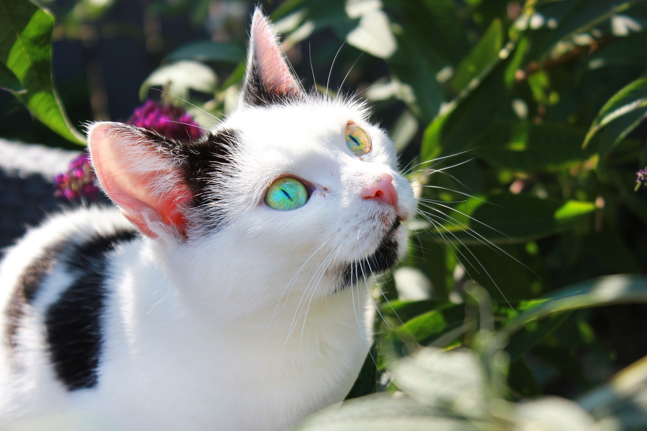 5 Detoxifying Plants That are Safe For Cats