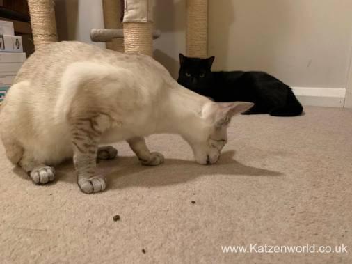 Katzenworld Doc and Phoebe0011