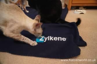 Katzenworld Zylkene0001